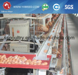 銀製の星のファクトリー・アウトレットの価格の養鶏場の卵の層の鶏のケージ