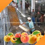 Máquina de levantamento do transporte para a fruta e verdura