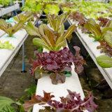 Invernadero hidropónico agrícola de la Doble-Película con el certificado del Ce