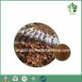 100% d'extrait d'écorce de pin naturel avec 95% de proanthocyanidines
