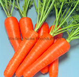 New Crop Fresh Carrot Vegetable