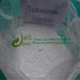Testosterona Enanthate del polvo del esteroide anabólico para el aumento del músculo