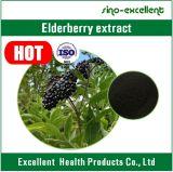 Extracto natural de la baya del saúco de la antocianina 5%-25% de la baya del saúco