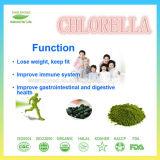 Gesundheitspflege-Produkt-Chlorella-Puder-Einzelverkaufs-Satz