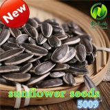 Les graines de tournesol chaudes de vente de l'Inner Mongolia