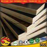 Poplar Core와 Melamine Glue를 가진 필름 Faced Plywood