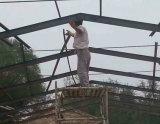 Las aves de corral del panel de pared de vidrio de fibra contienen para Suráfrica