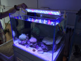 Justierbare LED-Aquarium-Lampe A6-330 mit Taste