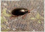 PE 곤충 그물이 야채를 위한 반대로 곤충 그물세공에 의하여 설치한다
