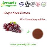 Germen herbario P.E. del tipo del extracto y de la uva de la variedad