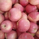新しく赤いQinguan Appleの高品質