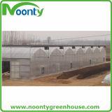 Agriculture de serre chaude avec la structure métallique galvanisée à chaud
