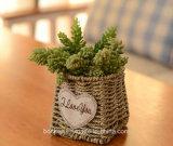 (BC-SF1009) Popular paja natural hecho a mano cesta de la flor