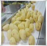 Grand type pomme de terre végétale Peeler et machine d'écaillement de rondelle