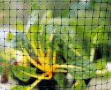 동물성 순수한 HDPE 그물 또는 새 그물