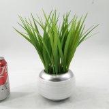 鉢植えな現代人工的な陶磁器のOniongrass