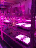 L'orticoltura all'ingrosso LED di saga 400W della fabbrica coltiva l'illuminazione