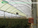 Коммерчески Multi Span Greenhouse для Rose