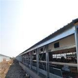 Matériel d'aviculture de qualité d'ensemble complet pour la ferme avicole