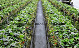 Agriculture PP Woven Ground Cover for Shop