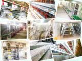 Grande capacité de couche de cage de poulet avec ISO9001