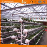 Planting Vegetables를 위한 높은 Quality Venlo Type 다중 Span Glass Greenhouse