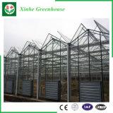 Système en verre de culture hydroponique de Chambre verte pour des légumes/fleurs/fruit