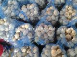 2016 aglio eccellente (500g/bag)