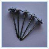 Galvano galvanisierter Regenschirm-Kopf-glatter normaler Schaft-Dach-Nagel