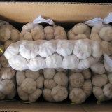 Aglio bianco normale cinese (4.5cm, 5.0cm, 5.5cm, 5.5cm, 6.0cm)