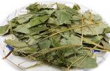 Epimedium corneo P.E. (Icariin 10%-50%) della polvere 489-32-7 dell'estratto del Weed della capra