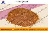 Exportor eccellente Produce 55% 60% 64% Feed Yeast per Aquaculture e Livestock e Poultry