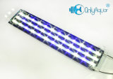 Meilleur 108W White + Blue Aquarium LED Lights