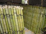자연 공장 직매 싼 가격 대나무 담
