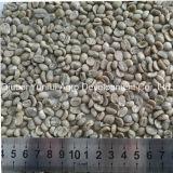 Китайское кофейное зерно зеленого цвета Arabica