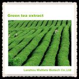 Polvo del extracto del té verde de la alta calidad