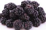 Do Mulberry natural do extrato da planta diretamente 100% da fábrica da fonte fibra dietética