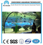 Precio de acrílico transparente grande modificado para requisitos particulares del proyecto del tarro de los pescados