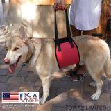 Correa lastimada del perro del acoplamiento de la ayuda del tirón de los vendajes del cuidado del perro del nilón