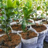 Tissu non-tissé remplaçable de l'utilisation pp Spunbond d'Agriculturer pour des couvertures de centrale