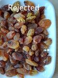 Classificador da cor para a grande capacidade dos Raisins dourados