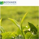 Estratto decaffeinato del tè verde che riduce il peso perdente grasso di anima