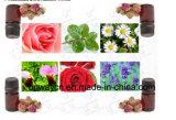 Alto extractor herbario eficiente del aceite vegetal de aceite esencial de las flores del precio de fábrica de Tq