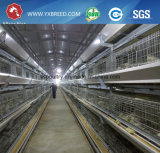 La volaille alimentent à des constructeurs le type matériel de H de ferme de cage de poulet de couche