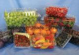 Vollautomatische Mehrplatzmaschine für Frucht-Behälter
