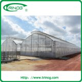 Коммерчески Fixed Vent Greenhouse для Rose