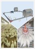 Autamatic Brüter-Huhn-führendes Gerät für Geflügelfarm-Haus