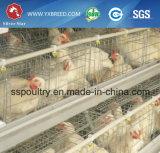Jaulas galvanizadas acero de las aves de corral para 5, 000 - 10, pájaros de 000 capas (A-4L120)