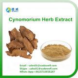 Het natuurlijke KruidenUittreksel van het Kruid Cynomorium