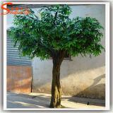 De altijdgroene Boom van de Ficussen van de Glasvezel van Sierplanten Kunstmatige